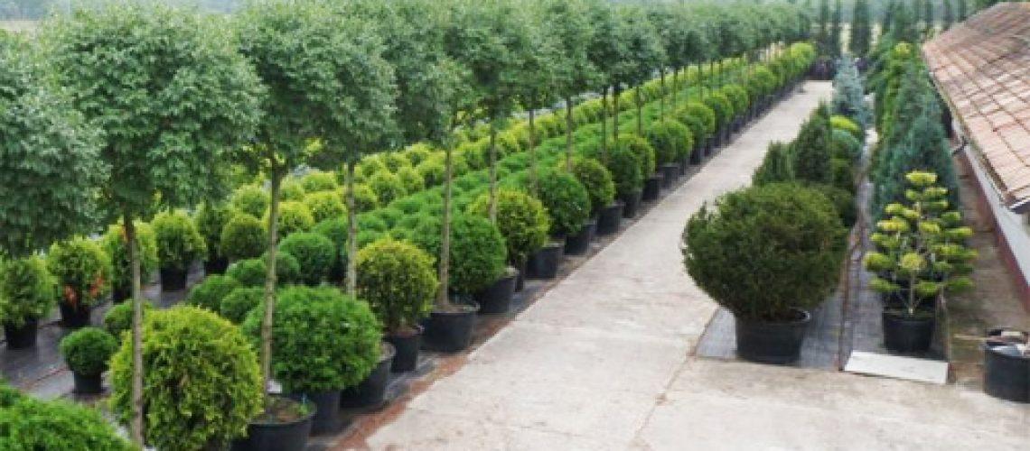 Átmeneti támogatás a dísznövény- és növényiszaporítóanyag-termesztők számára